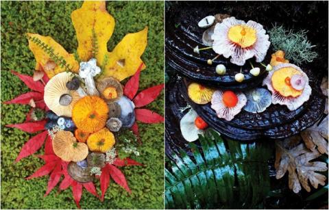Волшебная красота грибов: 25…