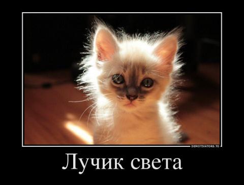 Подборка милых сердцу котов,…