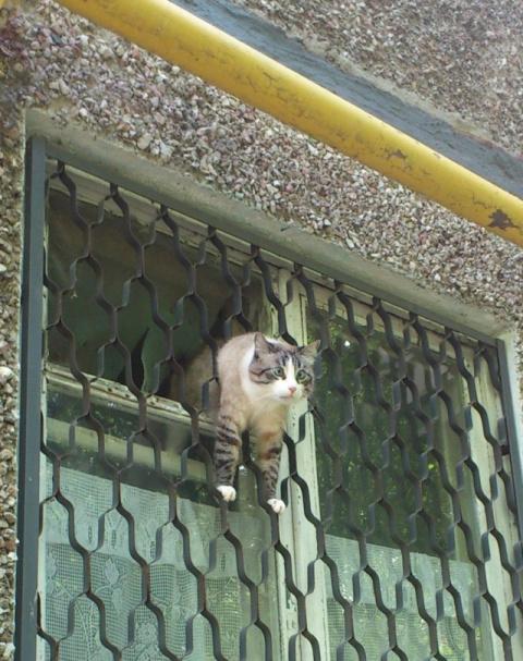 Любопытные кошачьи мордочки)