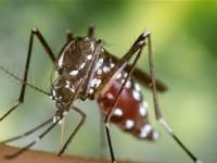 Вирус Зика - генетическое оружие?