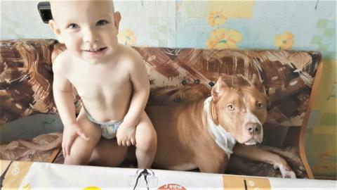 Собаки и Кошки очень любят массаж