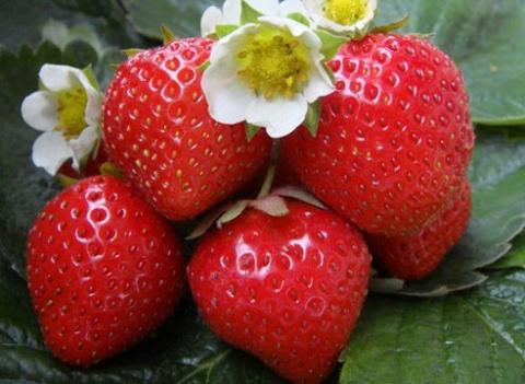 Почему клубника не плодоносит?
