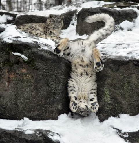 15 очаровательных фото снежн…
