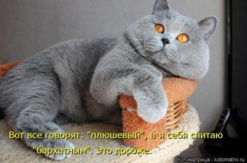 Свежая котоматрица)