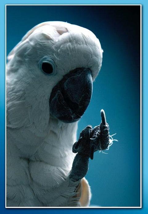 Хохмы с Сети. Попугаи, попуг…