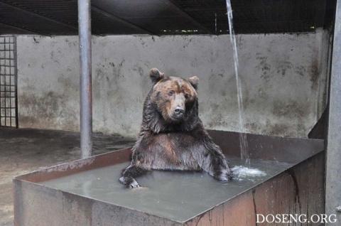 Животные, ищут спасения от жары
