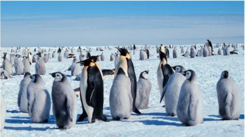 Дурдом шагает по планете: «Марш женщин» против Трампа прошел в Антарктиде