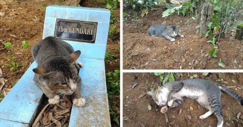 Преданная кошка уже год тоск…
