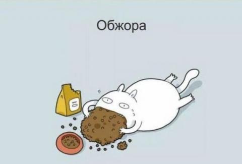 Классификация котов в 11 уга…