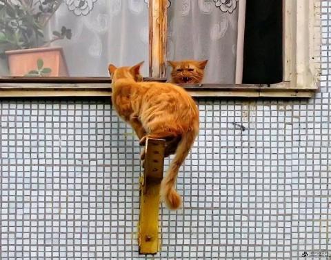 Кошки, люди и коты