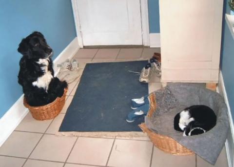 Как наглые коты отвоёвывают …