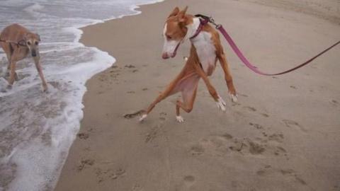 Собаки, которые боятся воды