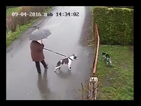 Собака попыталась напасть на…