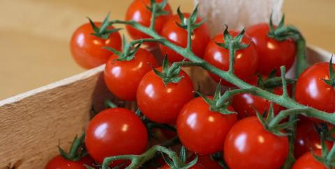 Россия просит Беларусь не ввозить африканские томаты