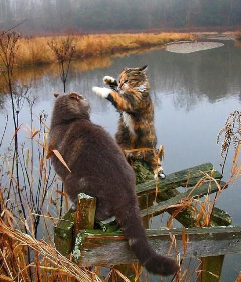 Поймали браконьера
