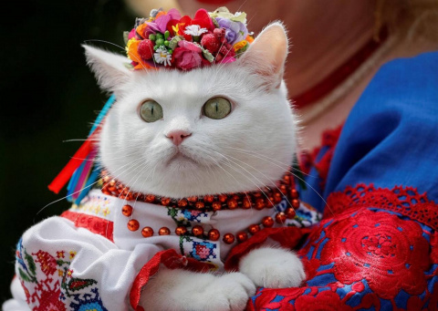 Украина - шоу трансвеститов,…
