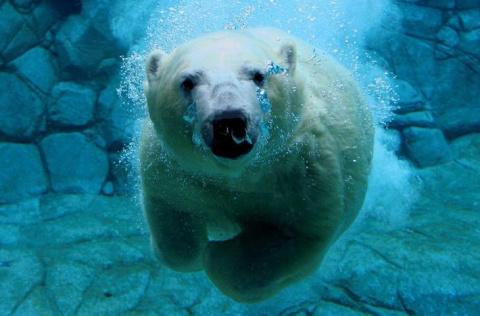Удивительные фотографии животных во время плавания