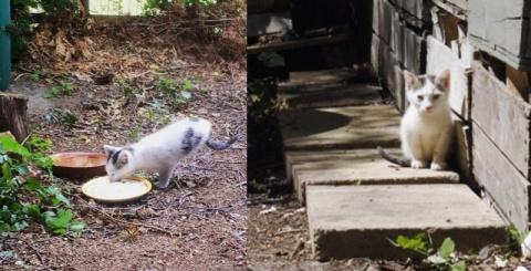 Двуногий кот Ракета