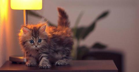 Интересные факты о кошках. Д…