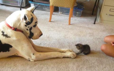 История о крошечном защитник…