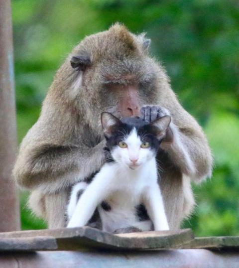 Бездомный кот стал лучшим другом для спасенной обезьяны