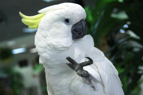 Самый эмоциональный попугай