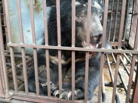 История спасения слепого медведя