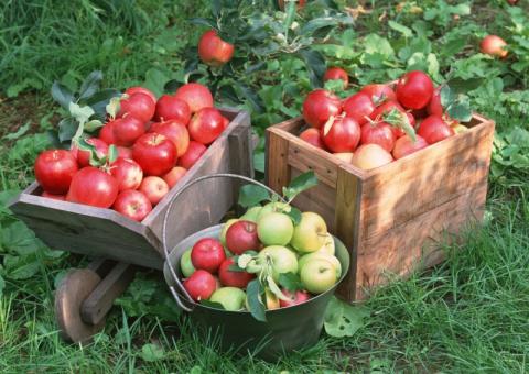 Апрель - лучшее время защитить урожай от долгоносиков и почковых клещей