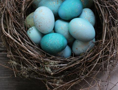 Волшебная краска для яиц: как красиво покрасить яйца