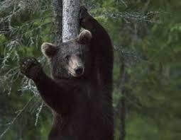 Девушка помахала медведю рук…