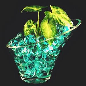 Выращивание рассады в гидрогеле