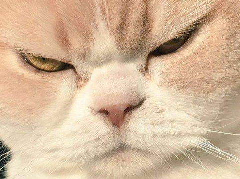 Кот, по кличке Батон, держит в страхе всех обитателей дома (видео)