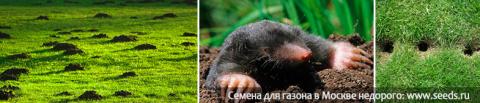 Как уберечь газон от мышей, …