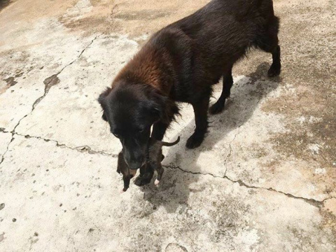 В Бразилии собака рылась на …