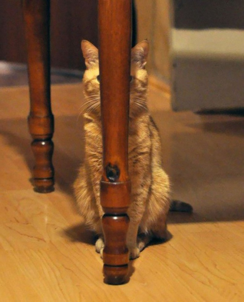 Спрятал голову и тебя уже никто не видит — 10 котов, которые думают, что отлично затихарились...