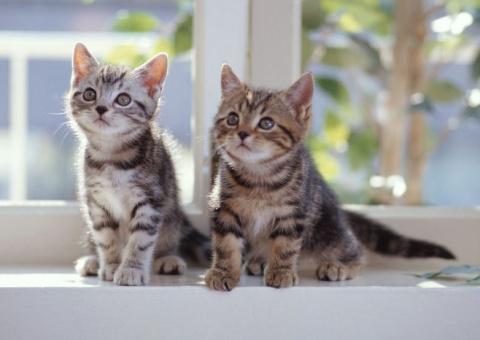 Народные поверья про кошек