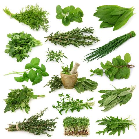 Травы для лечения печени и желчного пузыря