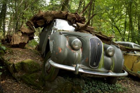 Гонщик собрал коллекцию автомобилей в немецком лесу