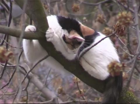 Москвичи спасли кошку, которая три дня провела на дереве высотой в шесть этажей
