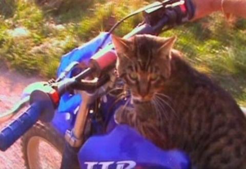 Кошки-экстремалы во время за…