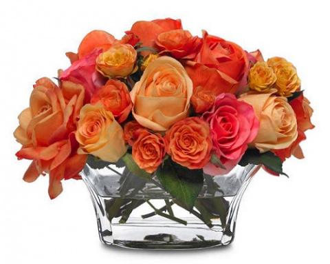 Как вырастить розу из срезан…