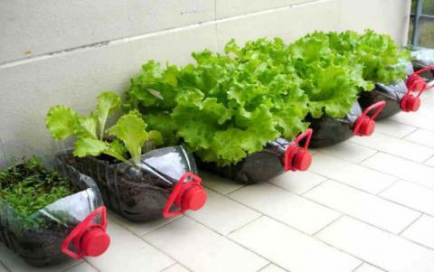 Новый способ выращивания рассады