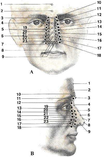 Проекции внутренних органов на лицо
