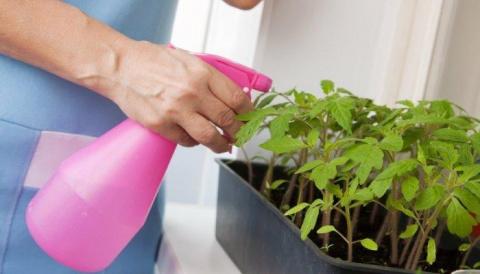 Какие препараты для защиты рассады можно применять в квартире