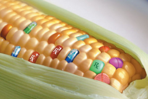 Исследования ГМО: подкручиваем счетчики?
