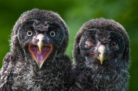 Кадр на миллион — 12 фотографий мира животных, где момент пойман просто шедеврально