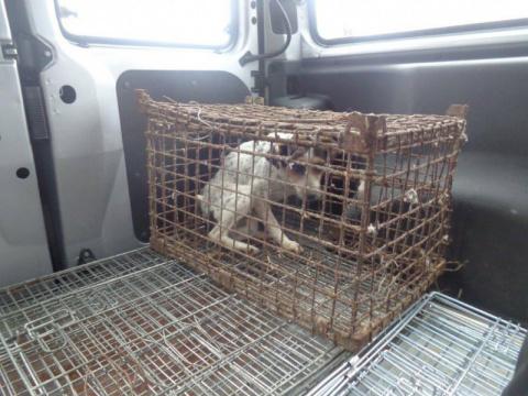 В Польше спасли собаку, кото…