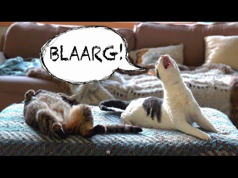 Странные звуки от кота