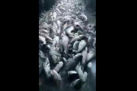 Рыбалка по Китайски.