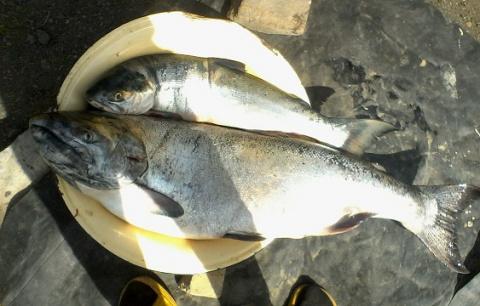 Мои блюда из рыбы и морепродуктов! Похвастушки.